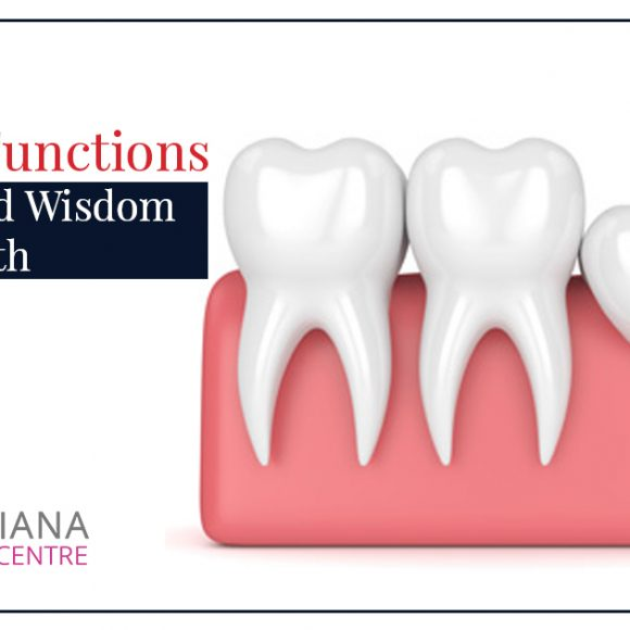 Different functions of Molar and Wisdom Teeth