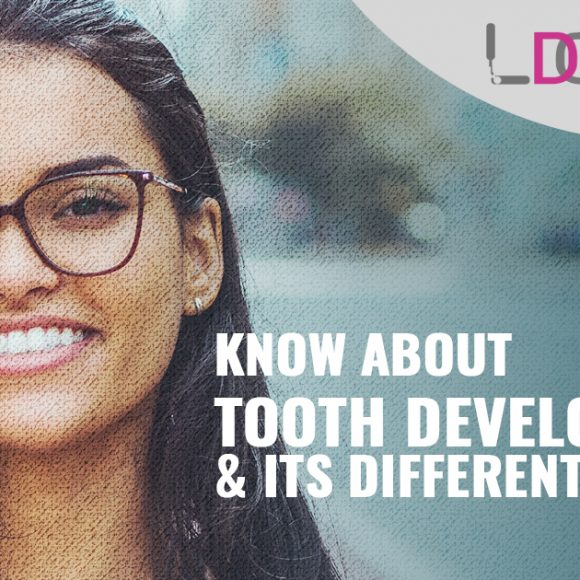 What do you need to know about tooth development and its different parts?